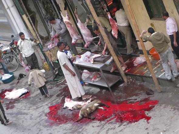 Eid Al Adha Sacrifice Animal